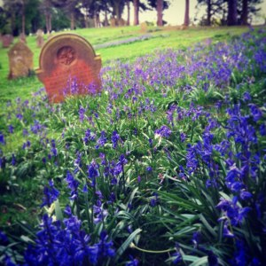 Bluebells in cemetery by Edward Parnell