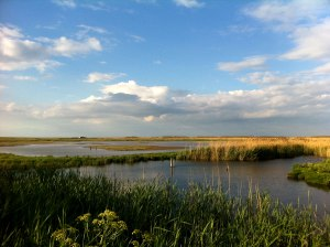 NWT Cley Marshes by Edward Parnell