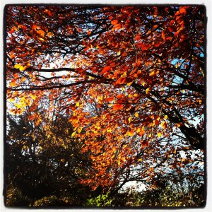 Autumn leaves by Edward Parnell