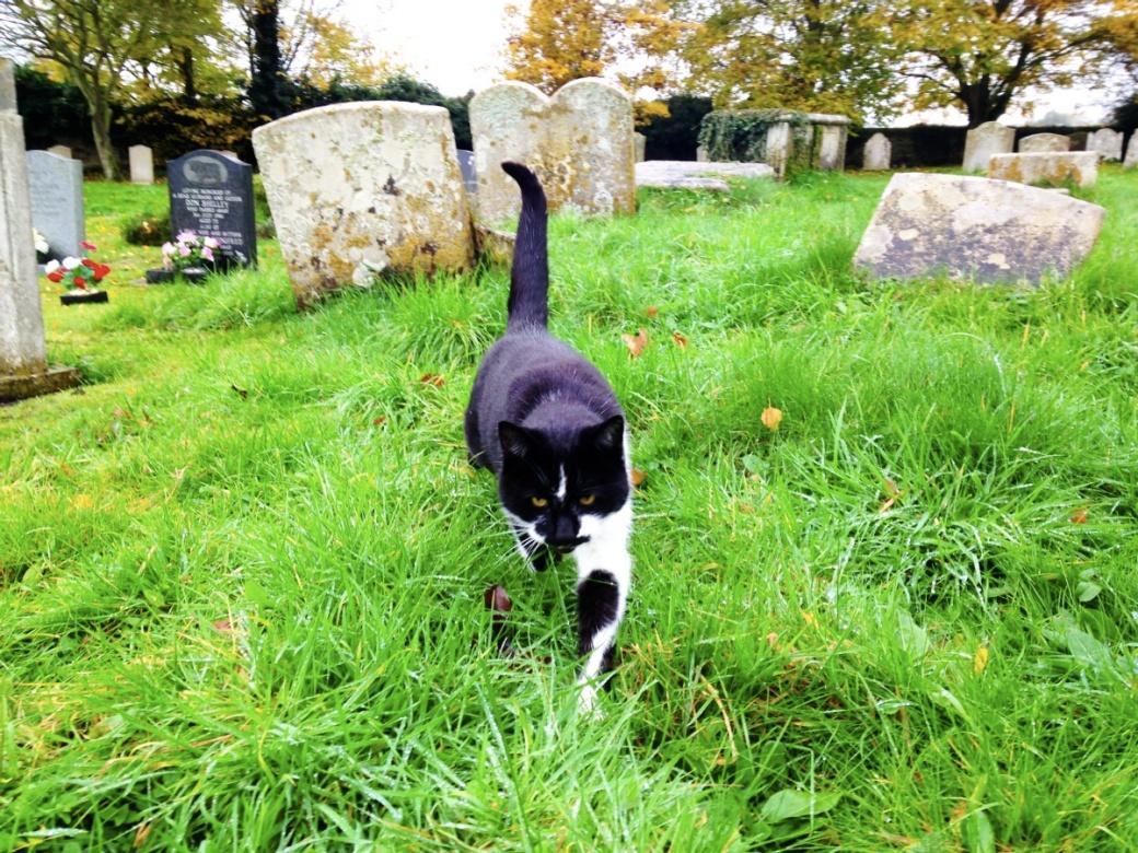 mrj_churchyard-cat