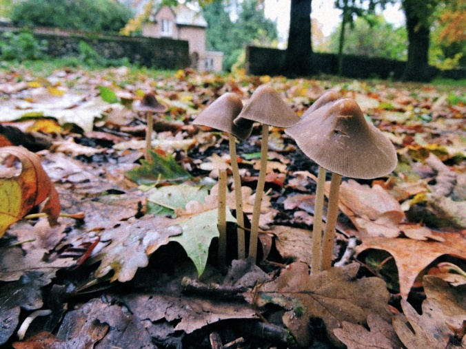 mrj_mushrooms