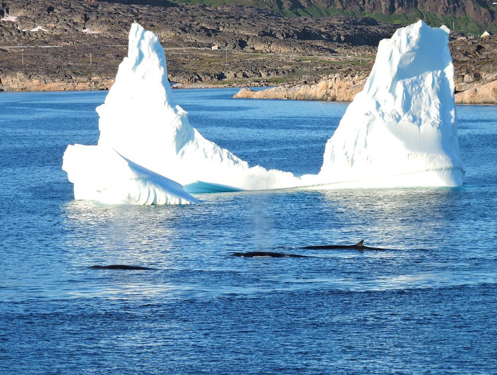 fin-iceberg-disko