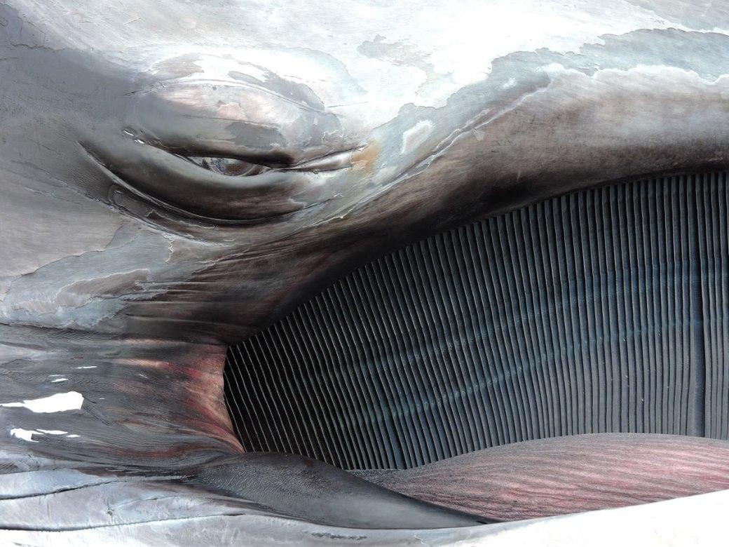 whale-eye_LO
