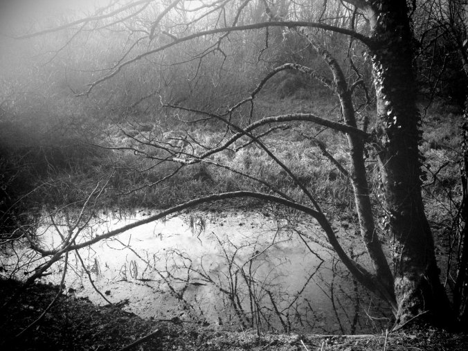 Photo copyright Edward Parnell